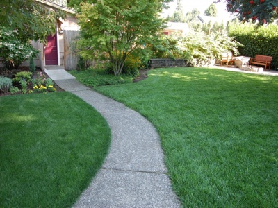 Sustainable Lawn with Drip Irrigation