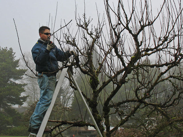 Renovation Pruning