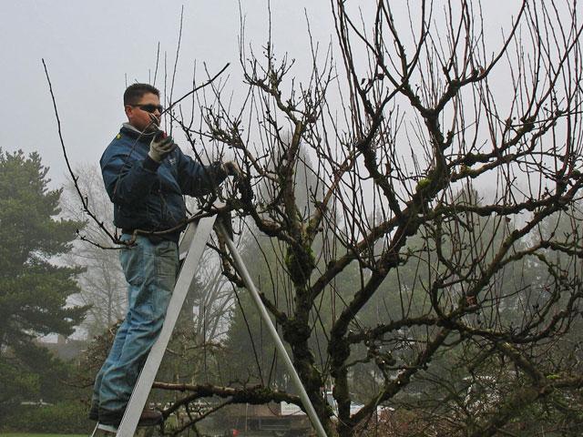 Renovation Pruning