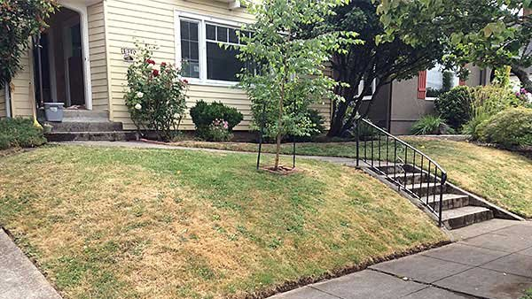 Curing Lawn Dry Spots