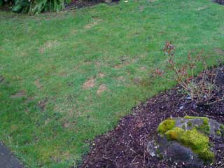 Repairing Winter Lawn Damage