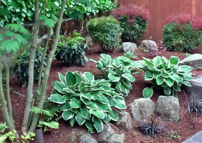 Plantings-Harrington-1